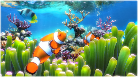 Sim aquarium virtual aquarium screensaver and live for Swimming fish screensaver